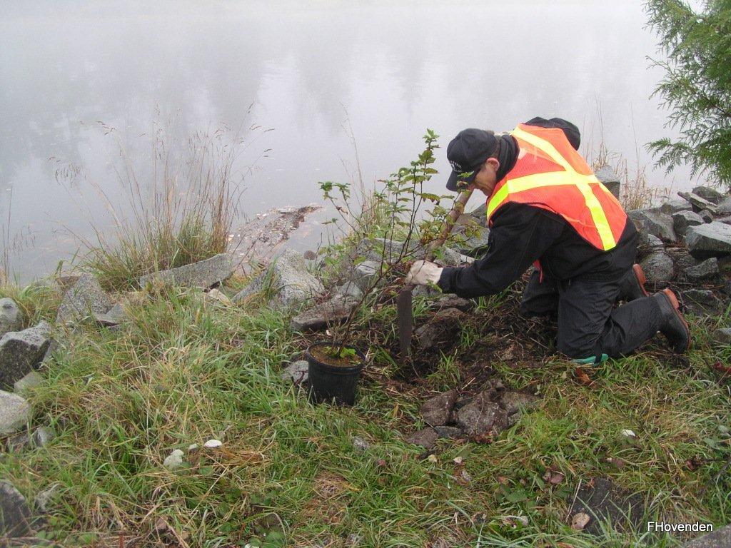 Planting Ninebark
