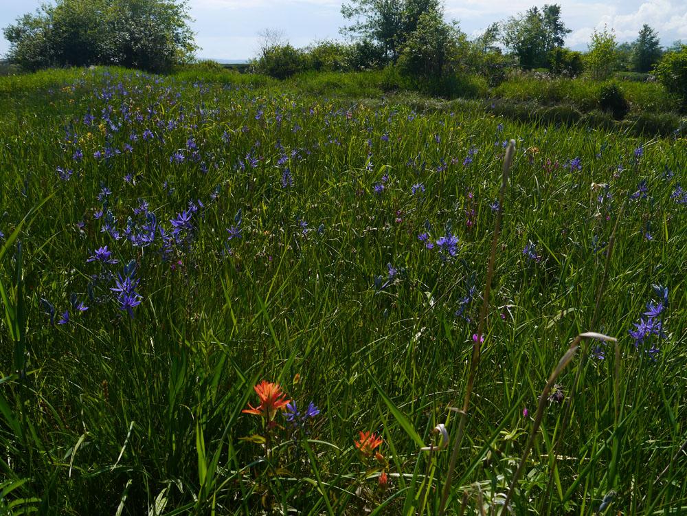 Estuary of Flowers